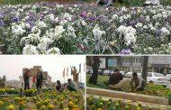 کاشت گلهای زینتی در میادین و بلوارهای سطح شهر مسجدسلیمان