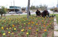 کاشت گلهای تزئینی و فرم دهی درختان در آستانه نوروز توسط شهرداری مسجدسلیمان