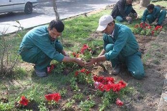 کاشت گلهای فصلی در میدان ورودی شهر مسجدسلیمان
