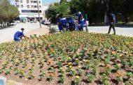 عملیات کاشت انواع گل های فصلی (تزئینی) در میادین و معابر شهری توسط شهرداری مسجدسلیمان